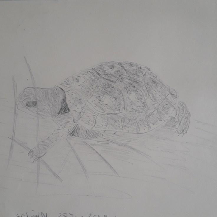 turtlesteps